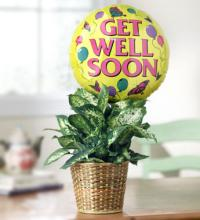 Get Well Plant with Balloon